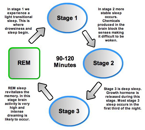 sleep cycles and stages lack of Stage r sleep (rem sleep) has tonic and phasic components the phasic  component is a sympathetically driven state characterized by rapid.