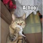 A-Choo! It's a Wake-Up Alarm.