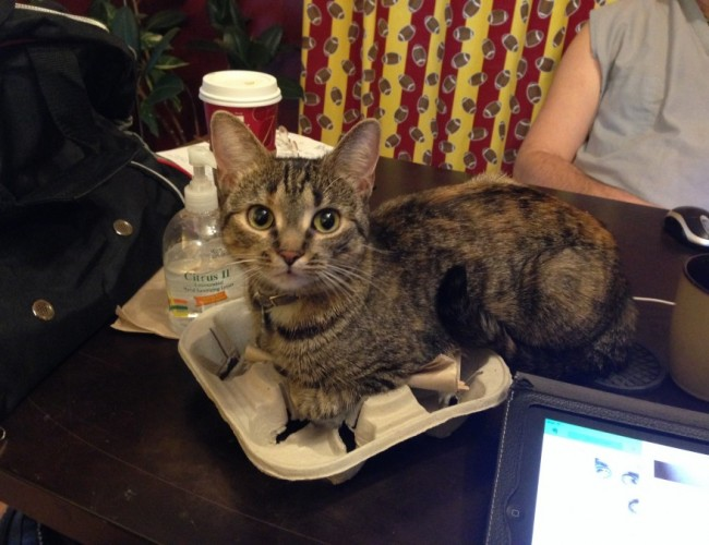 Cat on Coffee Tray