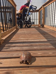 The little guy we came across while heading to the deck this morning.